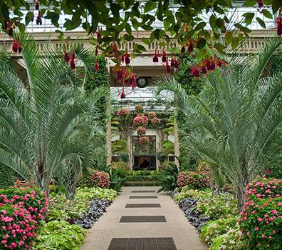 Maintenance des jardins à Marrakech || Maintenance of gardens in Marrakesh