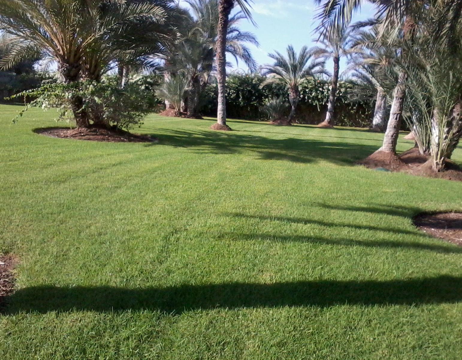 Entretien des espaces verts à Marrakech Maroc || Maintenance of green areas in Marrakech Morocco